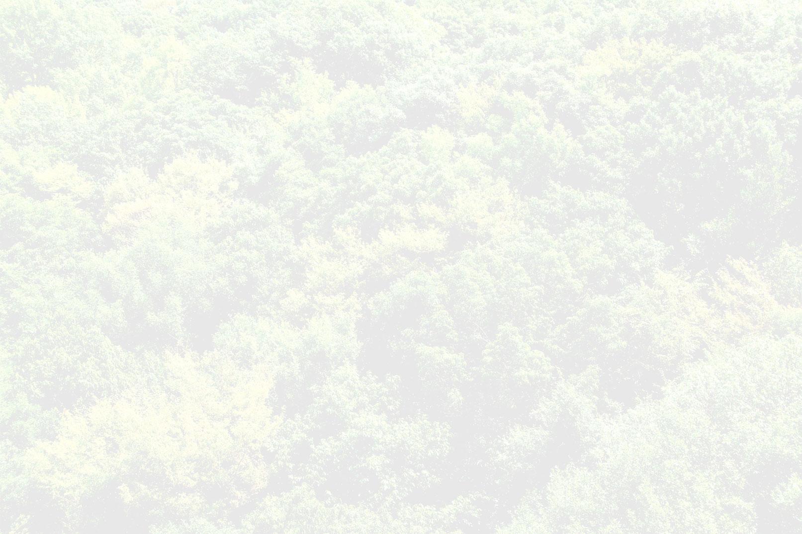 Chi siamo sfondo bosco