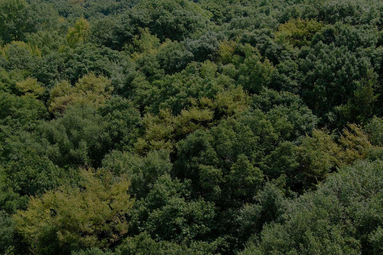 Francotyp-Postalia sfondo bosco